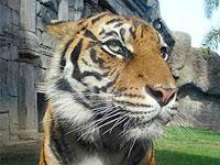 Animal and Eco Tours